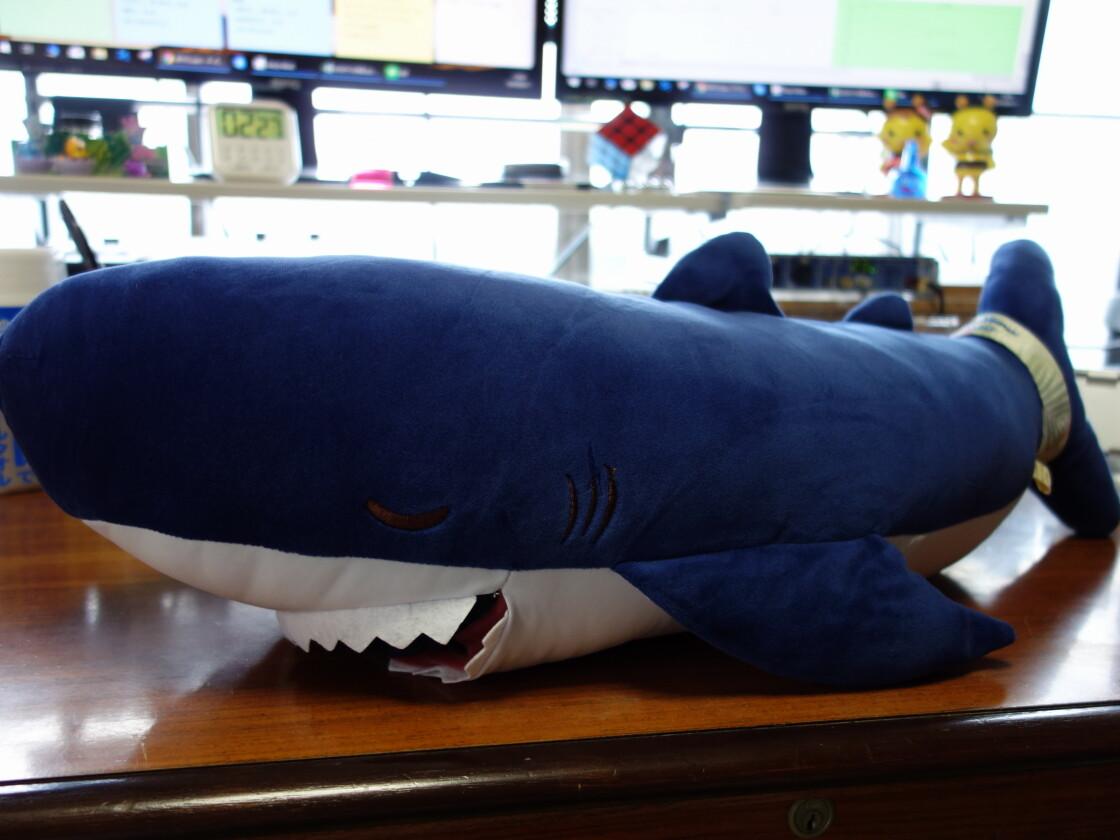 サメのザップの外観